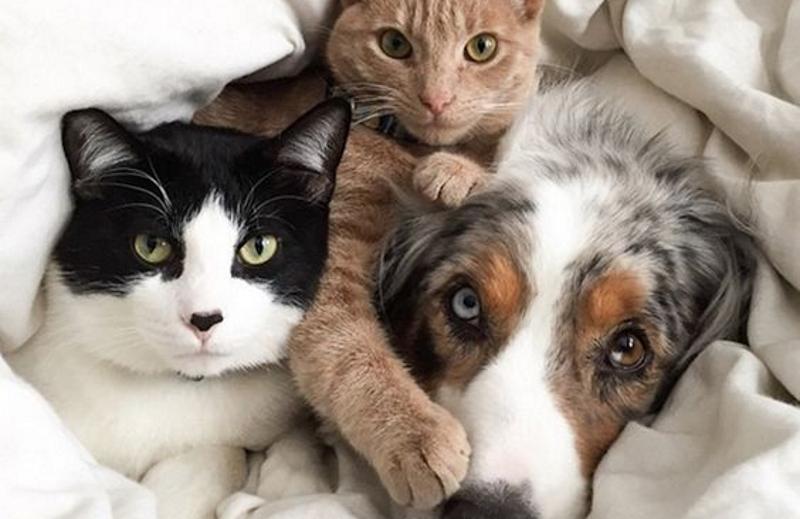 Кошки и собака