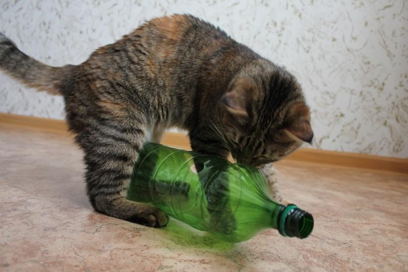 лайфхаки для кота