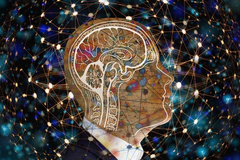 та устроен мозг