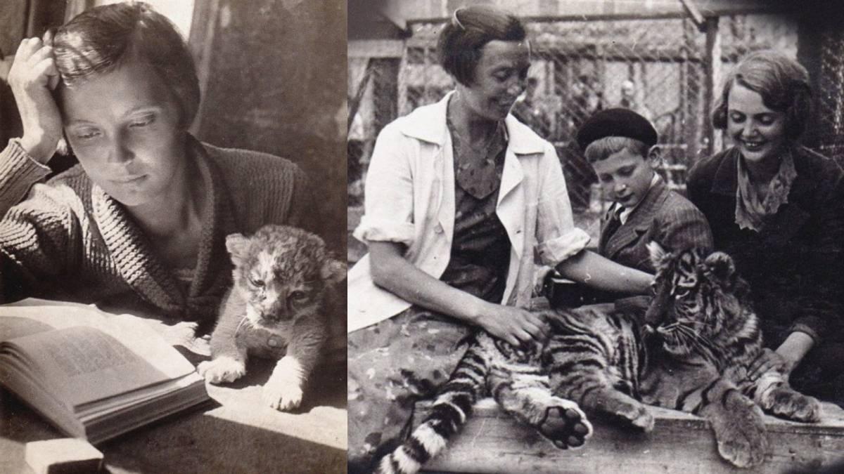 Зоопарк на дому. Как Вера Чаплина и львица Кинули дружно жили в обычной коммуналке|(СОК.Медиа)