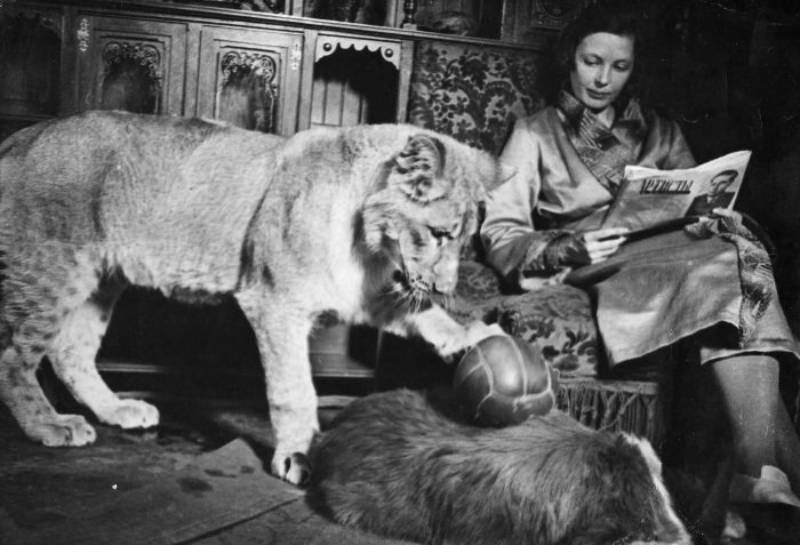 Зоопарк на дому. Как Вера Чаплина и львица Кинули дружно жили в обычной коммуналке (СОК.Медиа)